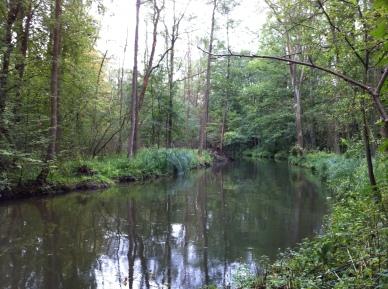 Unterer Spreewald Wildnis